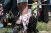 Почти четыре десятка собак разных размеров и с разным уровнем дрессировки стали участниками этого костюмированного события.