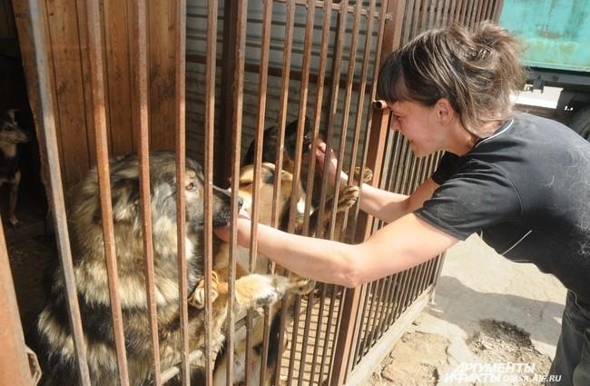 В этом году приют отмечает свое пятилетие. Здесь по-прежнему заботятся о бездомных животных и ищут им новых хозяев.