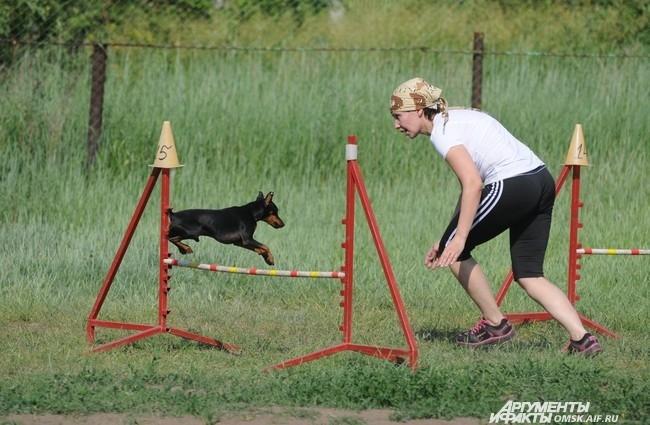 Чтобы показать класс, хозяевам собак приходится уделять тренировкам по 3-4 часа в день.