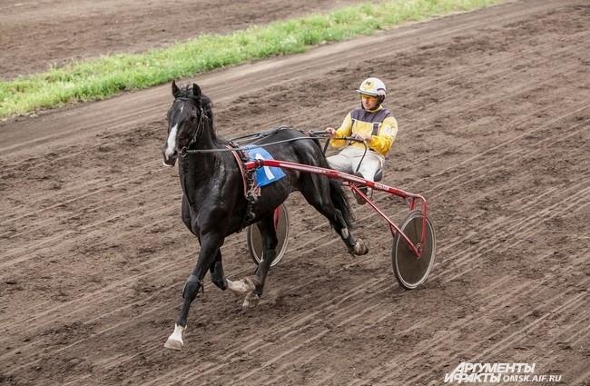 В «кубковых» соревнованиях, где призовыми считаются с 1 по 5 места, самые заметные результаты показали омские лошади, занявшие 3 и 4 места на дистанции 1,8 тыс.м.