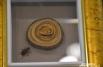 Выставка «Сибирь-XI». Матрёшки в кедровом орешке.