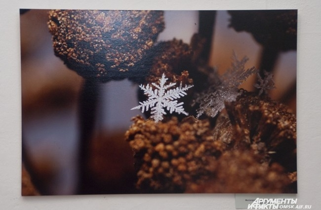 Фотография из серии «Снежинки», Андрей Осокин.