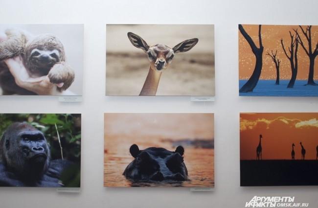 Выставка «Сто чудес света National Geographic. Золотая коллекция» отображает привычную реальность в новом свете.