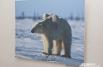 «Белая медведица со своим детёнышем», Н. Розинг.
