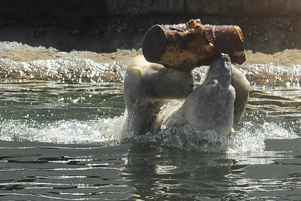 Ростовский зоопарк — один из крупнейших зоопарков России. Более 105 видoв содержащихся в зоопарке животных занесены в Красную книгу