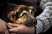 - Парии – это собаки неопределенного происхождения, попросту дворняжки, - говорят организаторы показа «PARIA FASHION»