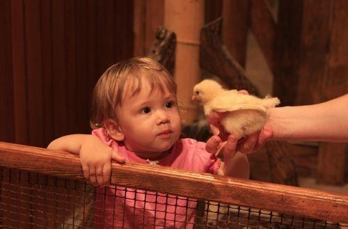 Цыплят, утят, крольчат и прочую живность здесь можно трогать руками