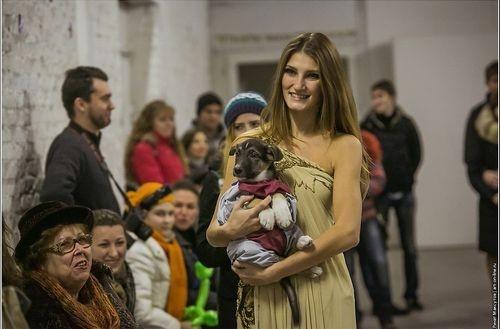 Дефиле-выставка бездомных собак прошла в Ростове впервые