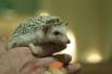 Почти всех зверей в трогательном зоопарке можно кормить прямо с рук