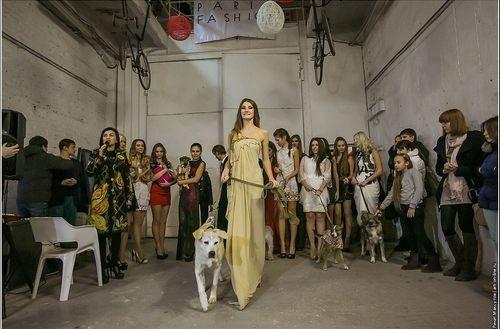 Питомцы из приютов Ростова-на-Дону прошли по подиуму вместе с моделями.