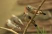 """Застать таких """"попугайчиков"""" на одном месте сложно: они невероятно подвижны"""