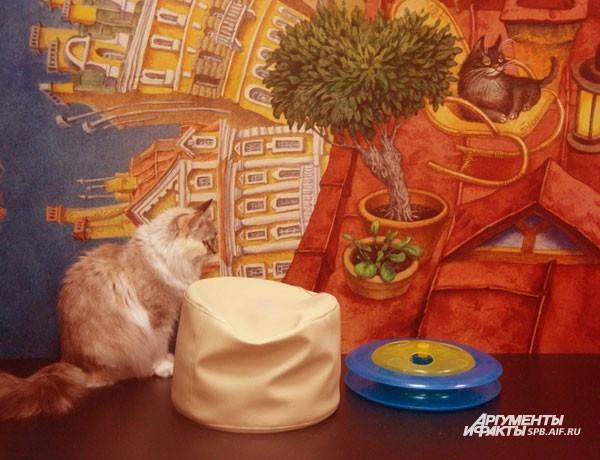 Музей «Республика кошек». ул. Якубовича, д.10. График работы: ежедневно, 11-20. Основное представительство музея находится во Всеволожске, а на улице Якубовича – филиал. Музей скорее похож на большой кошачий дом. После входа в волшебный шкаф вы оказывает