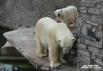 Белые медведи Услада и Меншиков