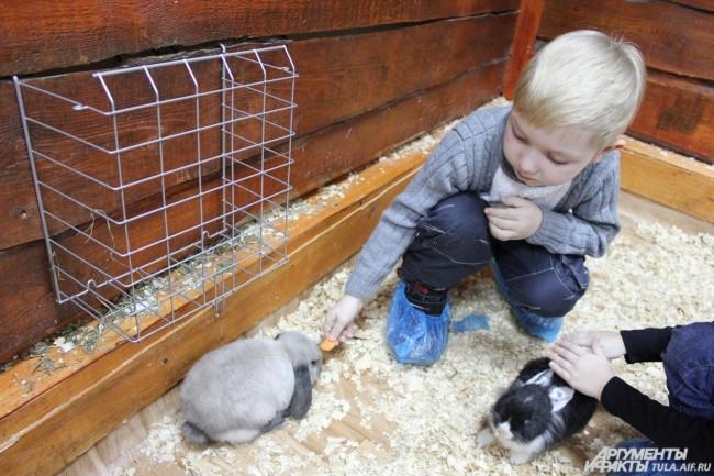 Кроликов можно было угостить морковкой