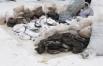 70 кг героина и 30 кг опия-сырца, изъятых у гражданина Таджикистана.