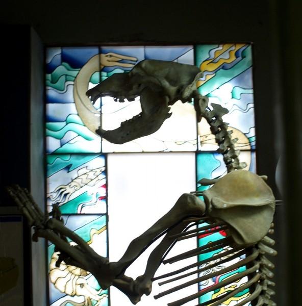 О древних и опасных временах напоминал зловещий скелет пещерного медведя.