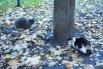Кошки резвятся среди опавших листьев.