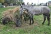 Лошадь решила доесть инсталляцию
