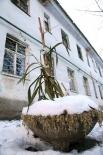 Изысканный бетонный вазон для озеленения внутридворовой территории дома на улице Тернопольской.