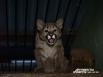В сентябре 2012 года на свет появились три котенка пумы – две самочки и один самец. Это первое потомство молодой дикой кошки. Пума оказалась хорошей мамой: ухаживала за котятами и кормила их. Спустя два месяца окрепших малышей забрали от родителей и отдал