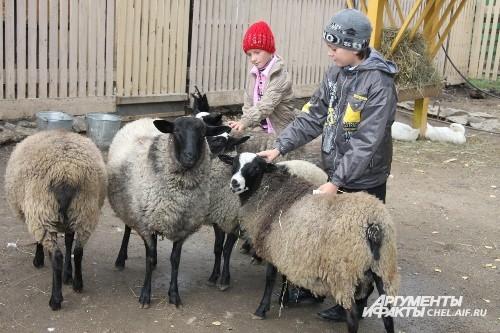 Для дошкольников и младших школьников построен детский контактный зоопарк. Ребята могут поиграть с прирученными животными: кроликами, козочками, барашками, уточками, курочками, ежиками и другими неопасными животными.