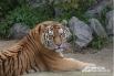 С февраля по март 2012 года в зоопарке проводился конкурс «Мистер Zoo». Самого красивого зверя выбирали челябинцы. В тройку финалистов выбились тигр Самур, шимпанзе Боня и лев Ричард. Победил Самур, набравший 19% голосов от общего количества.