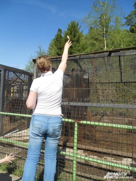 Посетителям зоопарка разрешается кормить животных – главное не проходить за ограждения.