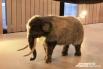 Маленький мамонтенок - экспонат Музея