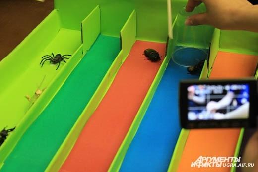 Африканских тараканов было не просто заставить бегать