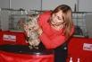 Некоторые кошки в голос возмущались от такого бесцеремонного отношения. Так и этот ориентал не желал себя демонстрировать.