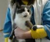 Такого котика увидела сегодня в клинике на Электротехнической. У него были перебиты дробью обе передние лапки. Врачи лапки спасли, вставили металлические штифты. Теперь кот живет в клинике, ему два года, стерилизован. Очень ласковый, и ему так нужен дом..