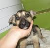 Маленького щеночка подбросили под забор стройки. Одному, без мамы, без семьи ему не выжить. Будет небольшим.