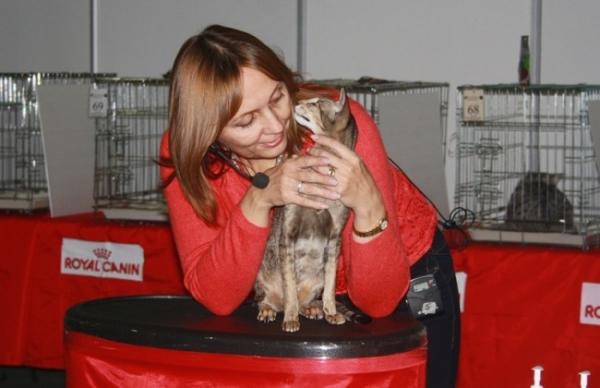 Специалисты оценивали кошек по разным параметрам, свойственным той или иной породе кошек. Окрас, размер туловища, хвоста, расположение ушей и глаз - ничего не осталось незамеченным от пристального взгляда жюри.