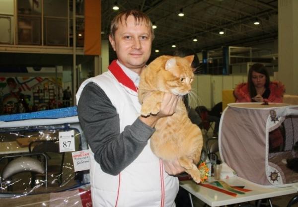 Хозяин победителя с гордостью демонстрирует кота. Курильский бобтейл — российская порода короткохвостой кошки. Интересно, что у этой породы короткий хвостик.