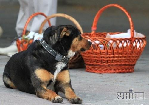 Собака сидит возле пасхальных корзин