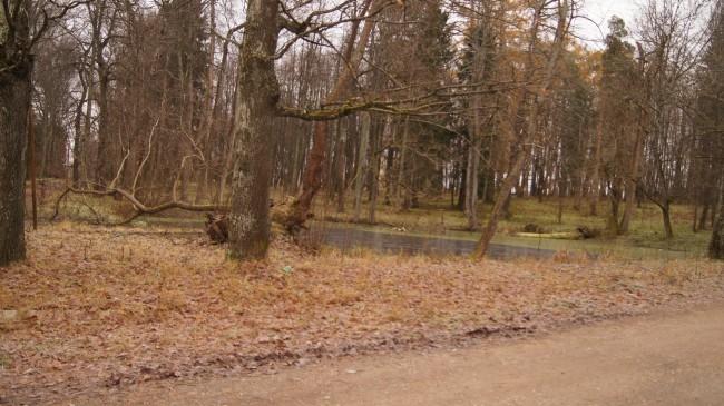 Маленькое болотце, вокруг которого, по легенде,  разворачивались действия в фантастической повести Булгакова  «Роковые яйца»