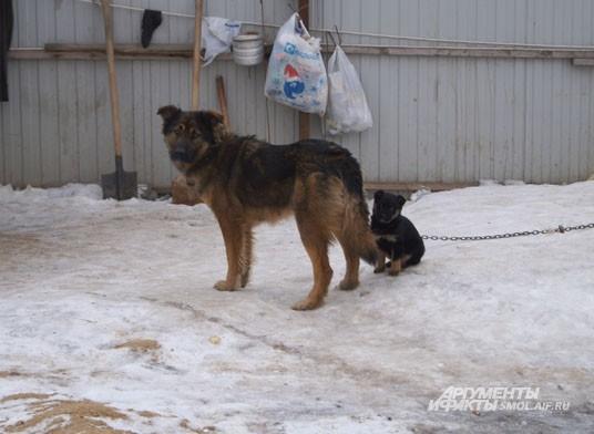Сторожевые собаки на набережной поживают хорошо, вот потомством обзавелись