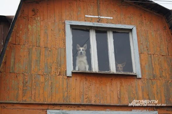 Дача Валентины и Юрия Федотовых. Бродяжки поселились и на чердаке.
