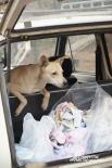 На даче Федотовых брошенные собаки обрели не только дом, но и автомобиль (правда, совсем старенький и не совсем на ходу)