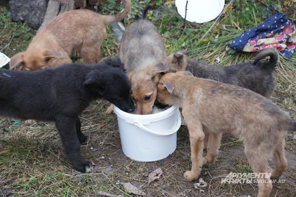 «Спасенцы» кормят спасенных
