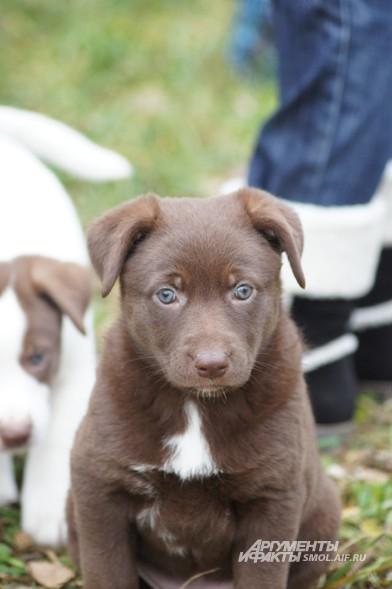Трудно поверить, но этого щенка активисты фонда «Спасение» нашли возле мусорных контейнеров на улице.