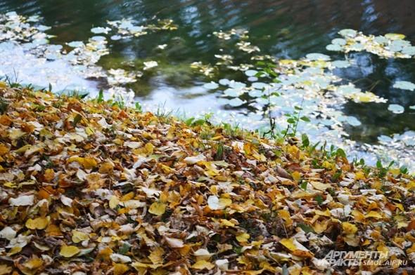 «Меж редеющих верхушек  Показалась синева. Зашумела у опушек  Ярко-желтая листва»  А.Твардовский, «Лес осенью»