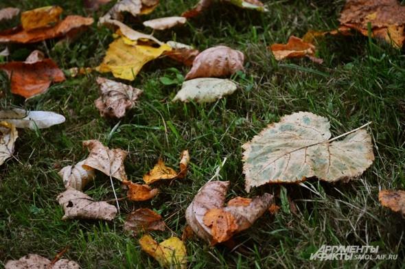«Еще нигде не вьюжится, И всходы - зелены»  М.Исаковский, «В дни осени»