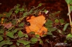 «В осень смерть под стать картине, В сон идет природа вся»  А.Твардовский, «Василий Теркин»