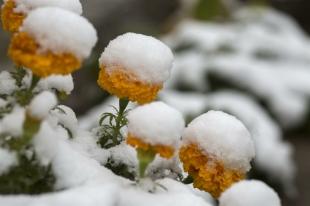 В Челябинске сегодня местами небольшой снег