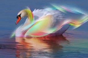 Лебедей приятно рисовать под музыку Сен-Санса