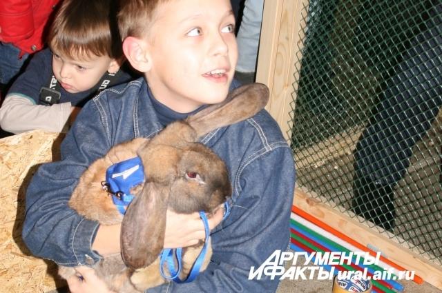 Безусловным победителем был признан кролик породы французский баран по кличке Конкур. По словам его тренера, самое сложное в двухмесячных тренировках было то, что… кролик не хотел прыгать