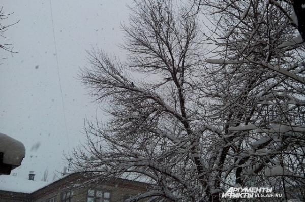 А снег не знал и падал. Земля была прекрасна и чиста