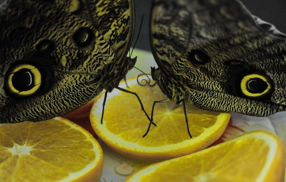 Это незасушенные экспонаты-все бабочки живые!