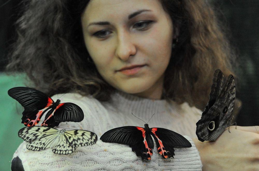 Экзотические,живые бабочки ждут ростовчан